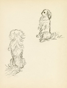 Art Prints of Pekingese 3 by Lucy Dawson