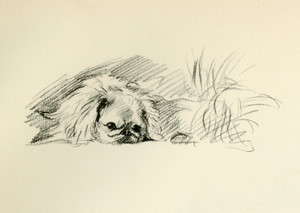Art Prints of Pekingese 6 by Lucy Dawson