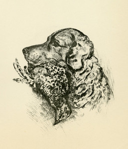Art Prints of Retriever with Grouse by Lucy Dawson