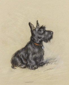 Art Prints of Scottish Terrier, Nannette by Lucy Dawson