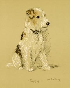 Art Prints of Taffy by Lucy Dawson
