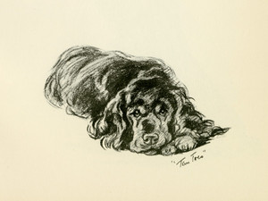 Art Prints of Tan Toes, Black Cocker Spaniel by Lucy Dawson
