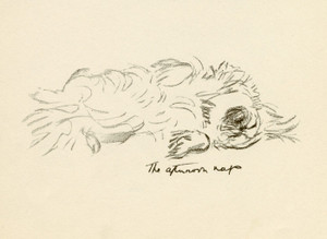 Art Prints of The Afternoon Nap, Pekingese by Lucy Dawson