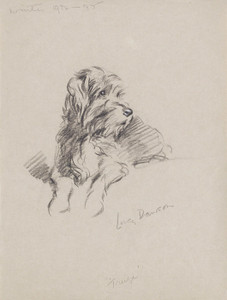 Art Prints of Treize, Wire Haired Terrier by Lucy Dawson