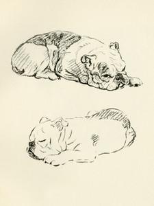 Art Prints of Two Sleeping Bulldogs by Lucy Dawson