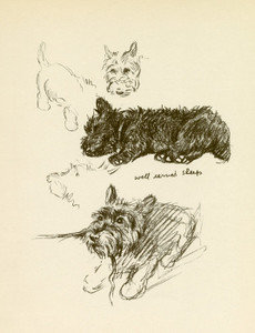 Art Prints of Well Earned Sleep, Scottish Terrier by Lucy Dawson