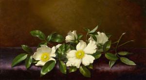 Art Prints of Cherokee Roses on a Purple Cloth by Martin Johnson Heade