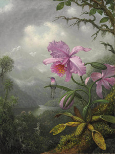 Art Prints of Hummingbird Perched on the Orchid Plant by Martin Johnson Heade