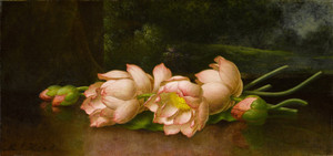 Art Prints of Lotus Flowers in the Background by Martin Johnson Heade
