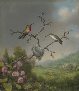 Art Prints of Hummingbirds and Apple Blossoms by Martin Johnson Heade