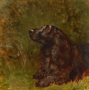 Art Prints of A Field Spaniel by Maud Earl
