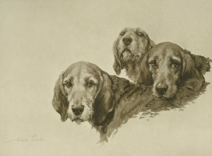 Art Prints of British Hounds and Gun Dogs by Maud Earl