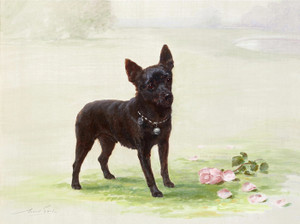 Art Prints of Standing Schipperke by Maud Earl