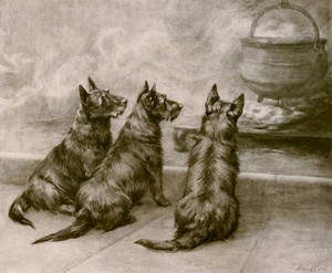 Art Prints of Three Scottish Terriers by Maud Earl