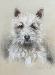 Art Prints of A West Highland White Terrier by Maud Earl
