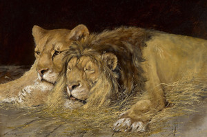 Art Prints of Lions at Rest by Olaf Carl Seltzer