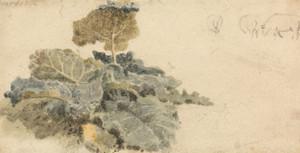 Art Prints of Study of Burdocks by Peter De Wint