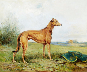 Art Prints of Greyhound in a Landscape by Philip Eustace Stretton
