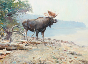 Art Prints of Moose at lake McDonald 1910 by Philip Goodwin