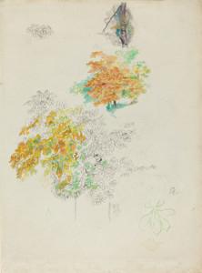 Art Prints of Studies of Trees by Pierre-Auguste Renoir