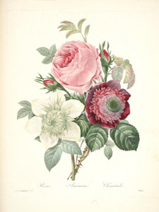 Art Prints of Anemone Rose Clematis, Plate 145 by Pierre-Joseph Redoute
