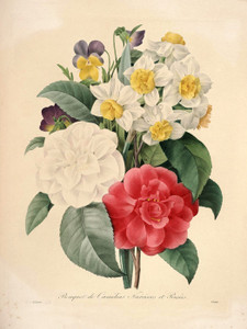 Art Prints of Camellia Narcissus and Pansy, Plate 129 by Pierre-Joseph Redoute