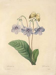 Art Prints of Gloxinia, Plate 9 by Pierre-Joseph Redoute