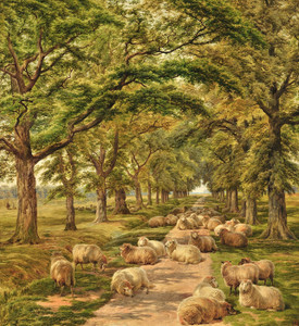 Art Prints of Sheep Resting on a Wooded Path by Robert Walker Macbeth