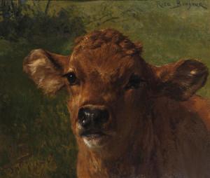 Art Prints of Head of a Calf by Rosa Bonheur