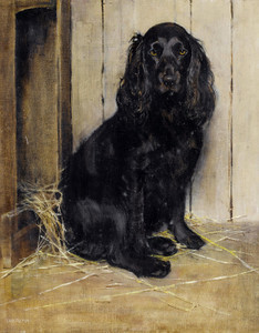 Art Prints of Portrait of a Cocker Spaniel by Samuel Fulton