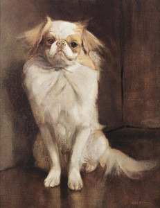 Art Prints of Portrait of a Japanese Chin by Samuel Fulton