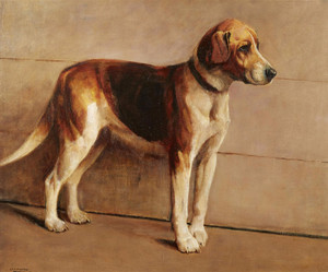 Art Prints of Foxhound in a Kennel by Samuel Fulton