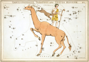 Art Prints of Camelopardalis, Plate 2, View of the Heavens by Sidney Hall