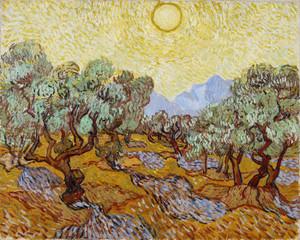 Art Prints of Olive Trees by Vincent Van Gogh