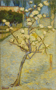 Art Prints of Small Pear Tree in Blossom by Vincent Van Gogh