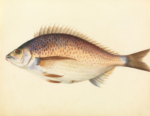 Art Prints of Perch by W. B. Gould