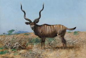 Art Prints of Antelope by Wilhelm Kuhnert