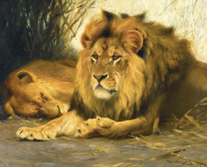 Art Prints of Resting Lions by Wilhelm Kuhnert