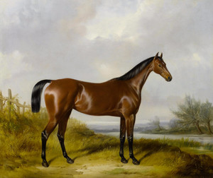 Art Prints of A Bay Hunter by a River by William Barraud