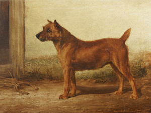 Art Prints of Irish Terrier by William Henry Hamilton Trood