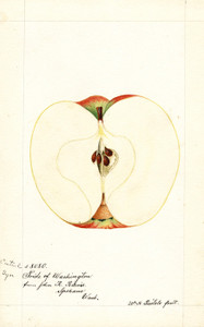 Art Prints of Cantrel Apple I by William Henry Prestele