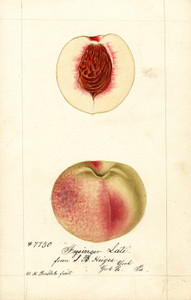 Art Prints of Frysinger Late Peaches by William Henry Prestele