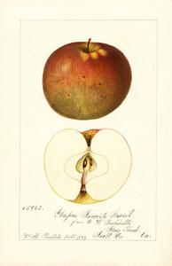 Art Prints of Glasses Favorite Sweet Apples by William Henry Prestele