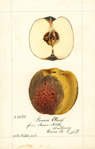 Art Prints of Genesee Chief Apples by William Henry Prestele