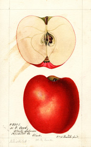 Art Prints of Klickitat Apples by William Henry Prestele