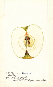 Art Prints of Lucinda Apple I by William Henry Prestele