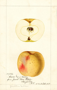Art Prints of Mouse Apples by William Henry Prestele