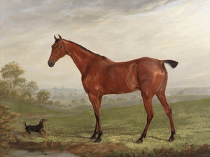 Art Prints of A Chestnut Horse in a Landscape with Terrier by William Webb