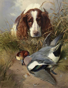 Art Prints of A Spaniel Retrieving a Widgeon by William Woodhouse