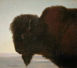 Art Prints of Buffalo Head by Albert Bierstadt